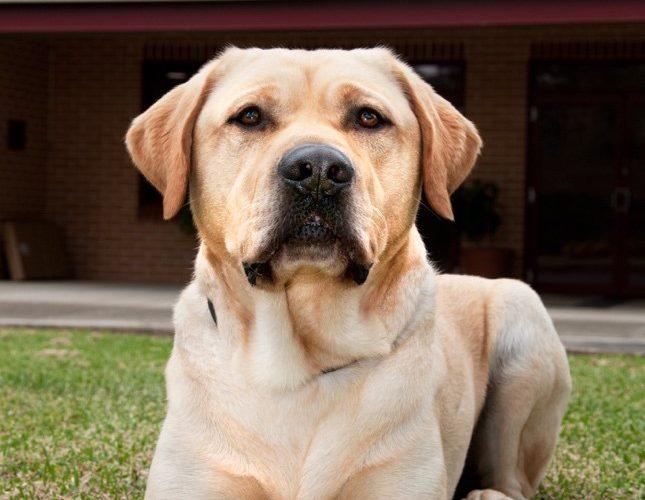 Koda - A Dog's Tale