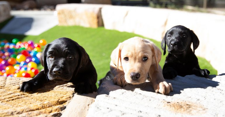 The new puppy enrichment area is open