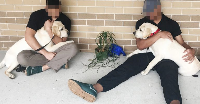 Guide Dog puppies help with rehabilitation in Juvenile Justice Centre