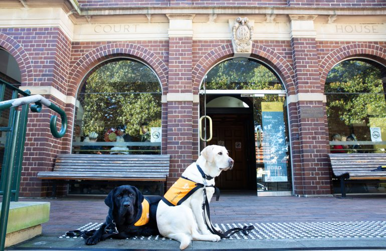 Guide Dogs NSW/ACT Now Providing Therapy Dogs in NSW Courthouses