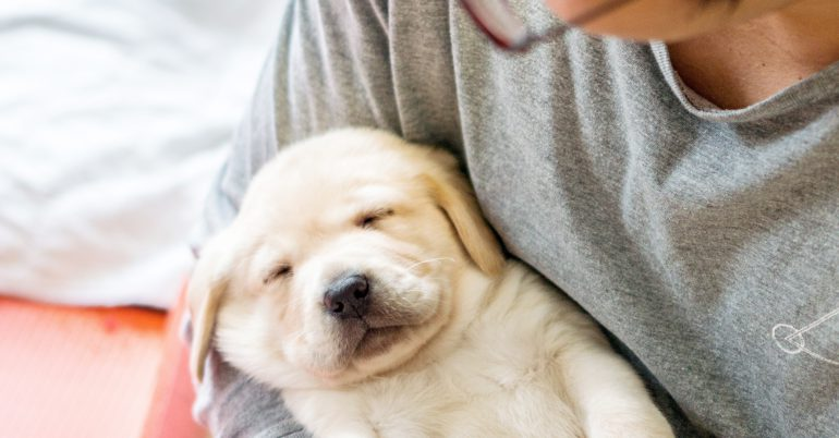 Guide Dogs Seeking Volunteers for New Home Birth Program
