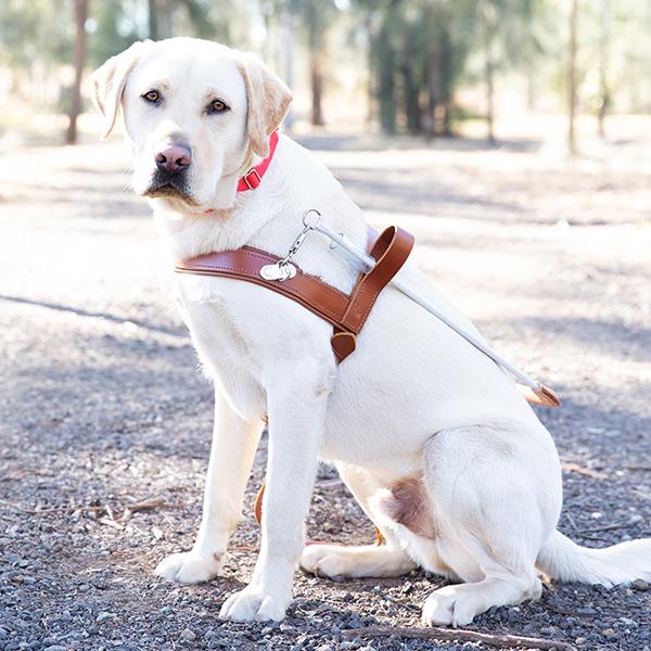 York the graduate Guide Dog