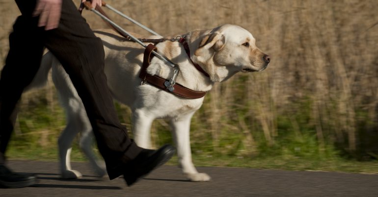 Guide Dog Schools from across globe converge on Sydney for International Guide Dog Federation Seminar