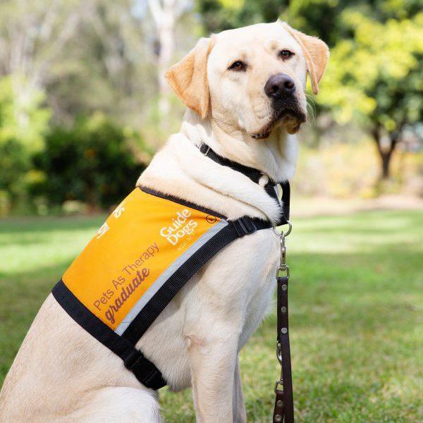 Therapy Dog Graduate Boetski