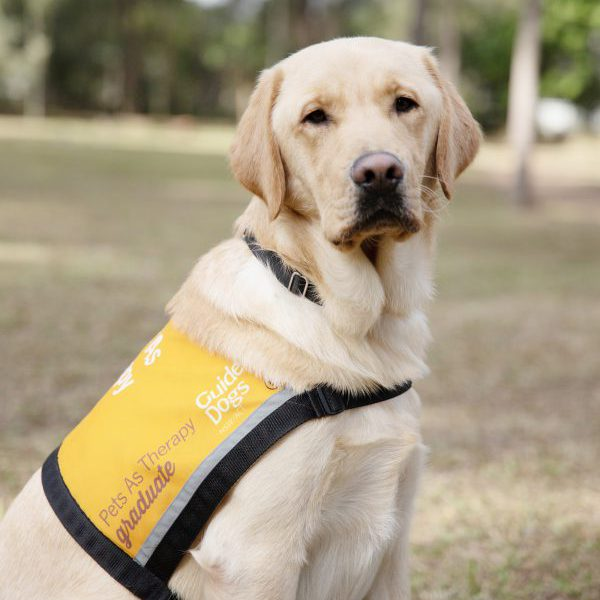 Therapy Dog Graduate Gillie