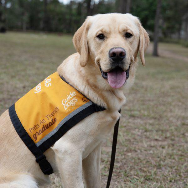 Therapy Dog Graduate