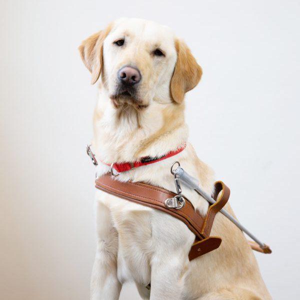 Guide Dog Graduate Gemma