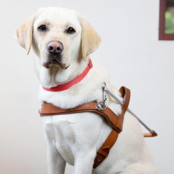 Guide Dog Graduate Errol