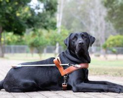 Guide Dog Graduate Johnnie