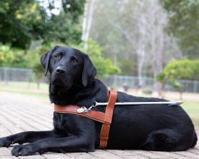 Guide Dog Graduate Kendrick