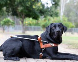 Guide Dog Graduate Kevin