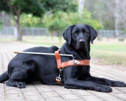Guide Dog Graduate Kiai