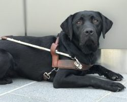 Guide Dog Graduate Mikayla