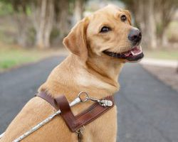 Guide Dog Graduate Rita