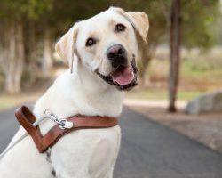 Guide Dog Graduate Dasher
