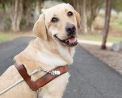 Guide Dogs Graduate Ryan