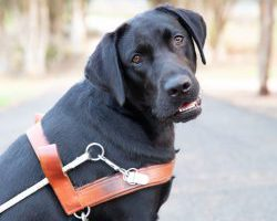 Guide Dog Graduate Ester