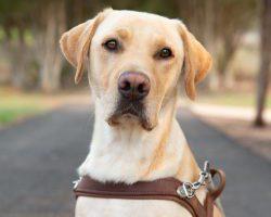 Guide Dog Graduate Joe