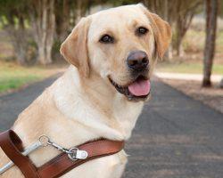Guide Dog Graduate Chrissy
