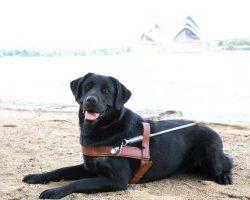 Guide Dog Graduate Brittany