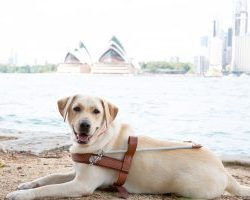 Guide Dog Graduate Tina