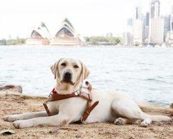 Guide Dog Graduate Uma