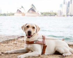 Graduating Guide Dog Ukie