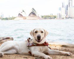 Guide Dog Graduate Vera
