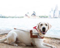 Guide Dog Graduate Topaz
