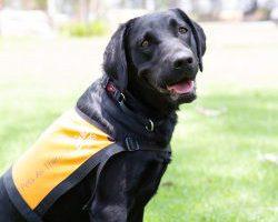 Therapy Dog Graduate Nikita
