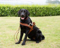 Guide Dog Graduate Nagini
