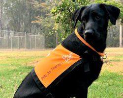 Therapy Dog Graduate Olinda