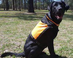 Therapy Dog Graduate Orbie
