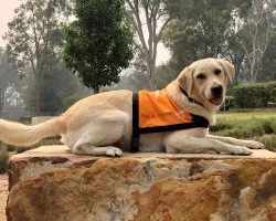 Therapy Dog Graduate Pearl