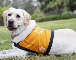 Therapy Dog Graduate Quinella