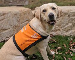 Therapy Dog Graduate Rowena
