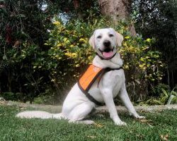 Therapy Dog Graduate Spark