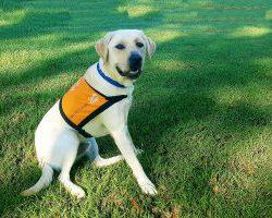 Therapy Dog Graduate Utah