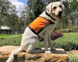 Therapy Dog Graduate Verity