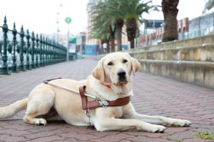 Guide Dog Graduate, Rinnie
