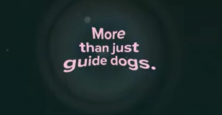 More than just guide dogs.