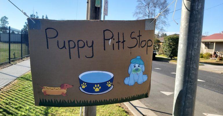 PAWGUST Puppy Pitt Stop!