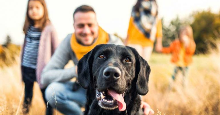 Reclassifed Pet Dog Pricing