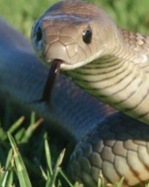The Scoop on Snakes